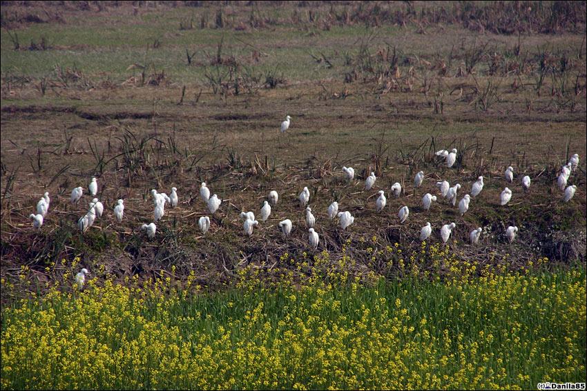 ...на зимовку птицы с севера, в том числе и из России.